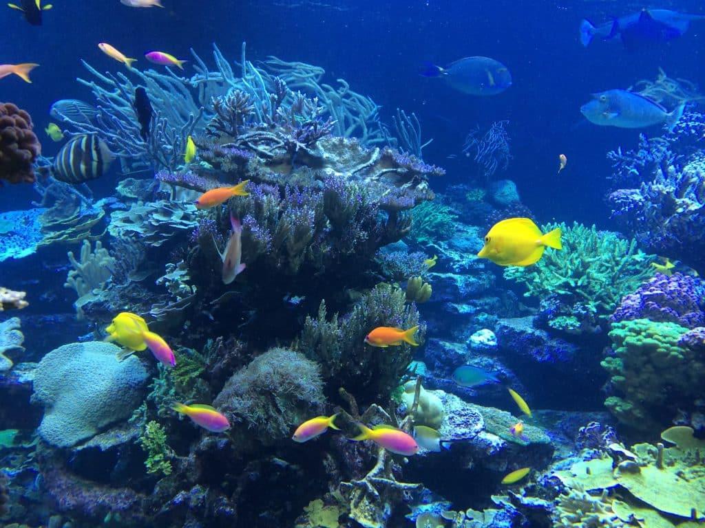 Wunderschöne Unterwasserwelt beim schnorcheln